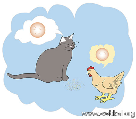 นิทานชาดก แมวกับไก่