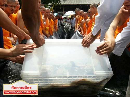 บุญปล่อยปลา 500 ตัว ปลาดุก 450 ตัว และปลาช่อนไข่ 50 ตัว