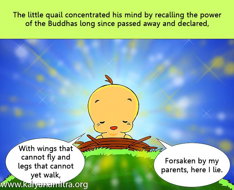 นิทานชาดกภาษาอังกฤษ วัฏฏกาชาดก นกคุ่มโพธิสัตว์ ว่าด้วยการทำให้เกิดความสุข