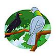 รูปนิทานชาดก นกพิราบกับกาเจ้าเล่ห์ กโปตกชาดก ว่าด้วยความเป็นผู้มีใจโลเล