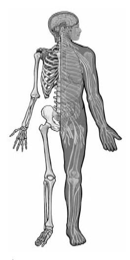 GB 410 การรักษาสุขภาพตามพุทธวิธี , ความรู้ทั่วไปทางพระพุทธศาสนา , DOU , ดุลยภาพบำบัดในสมัยพุทธกาล , ความเจ็บป่วยเนื่องจากโครงสร้างของร่างกายเสียสมดุล , ภาวะปกติของร่างกาย